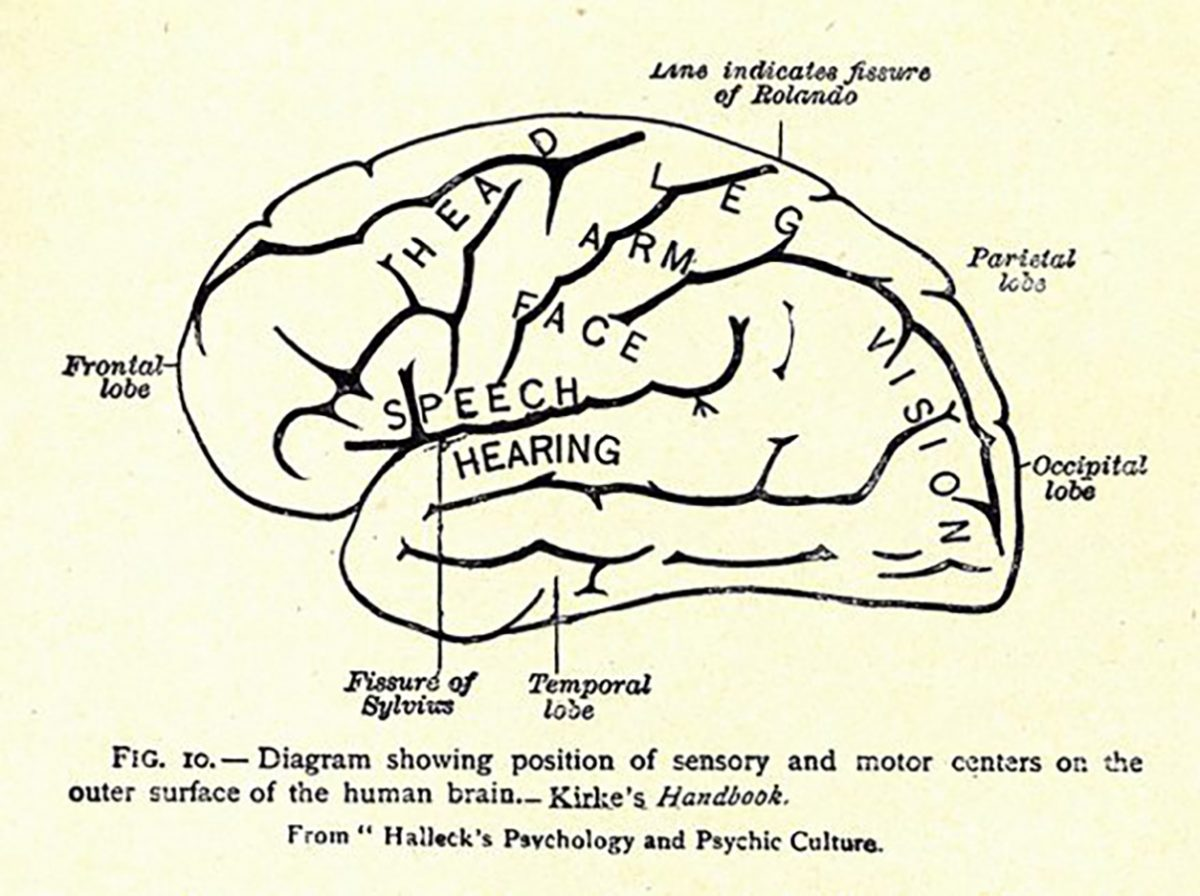 Image of the various centers of the brain and their relation to different types of expression from Charles Wesley Emerson's Philosophy of Gesture.