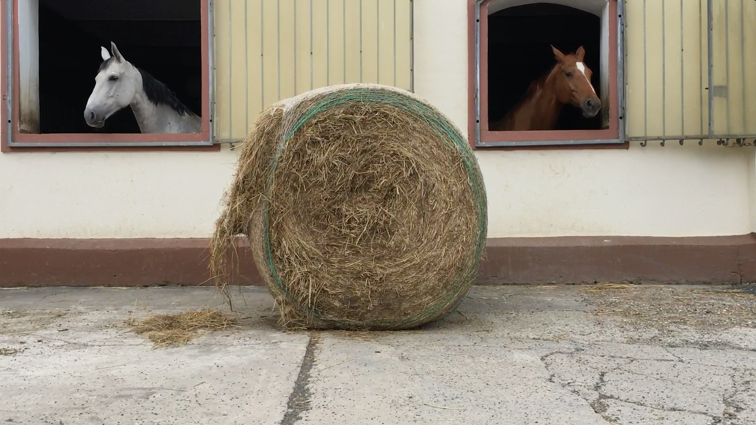 Two horses in a barn with a bale of hay