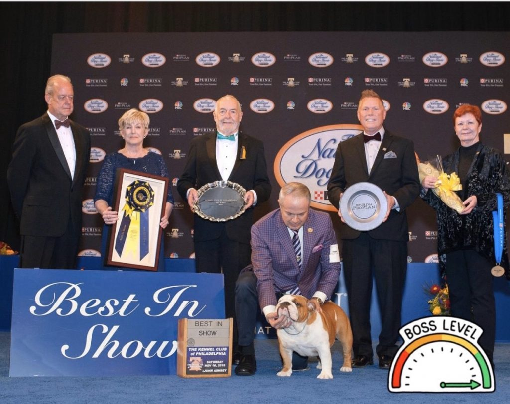 Thor at the National Dog Show in November 2019, with Thor being awarded the highest honor by Best in Show. Thor bested more than 2,000 other dogs.